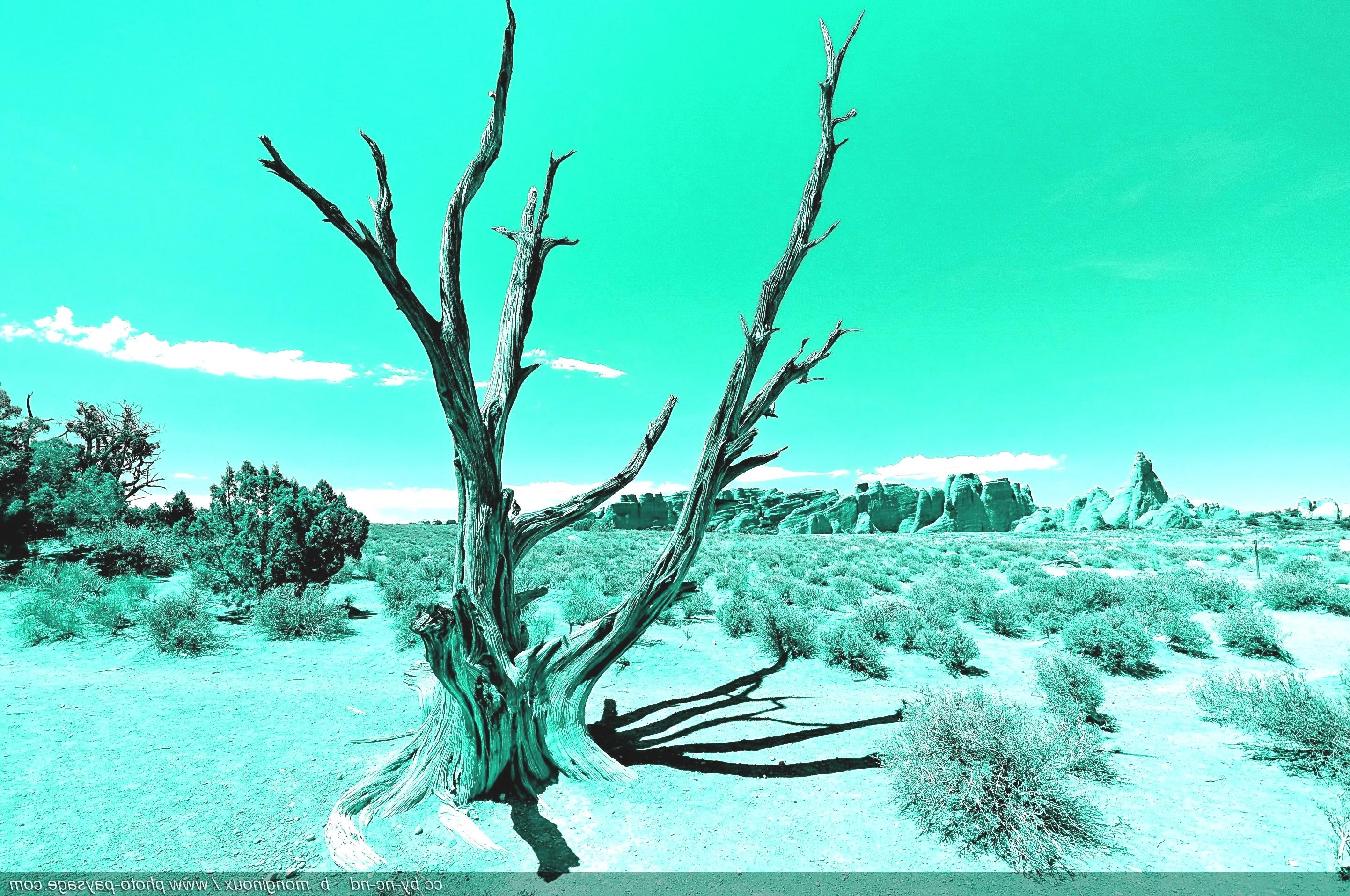 paysage-desertique.jpg